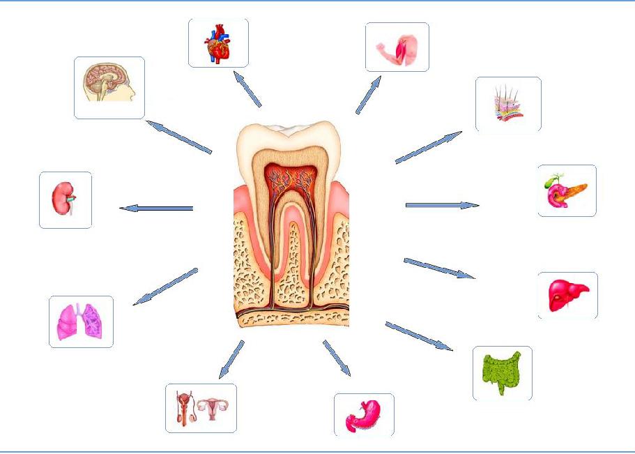 Odontologia Neurofocal